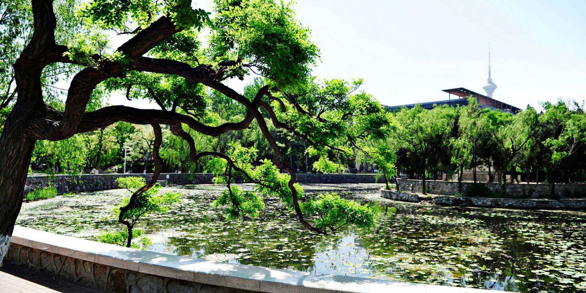 nankai-campus-lake-trees