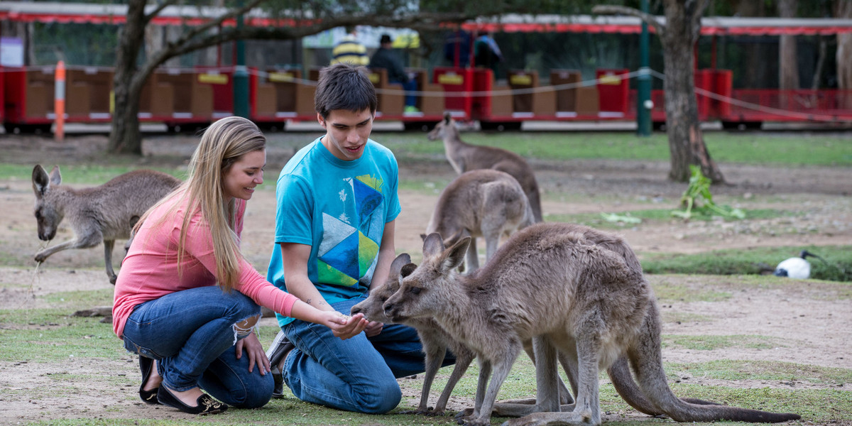 students at Currumbin Wildlife Sanctuary on the Gold Coast with kangaroos_ one of Australia_s unique animals. 14_0